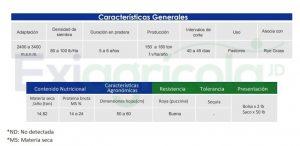 AMAZON 300x146 - RYE GRASS AMAZON PERENNE X 50 LIBRAS