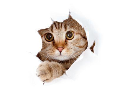 Gatos 🐱