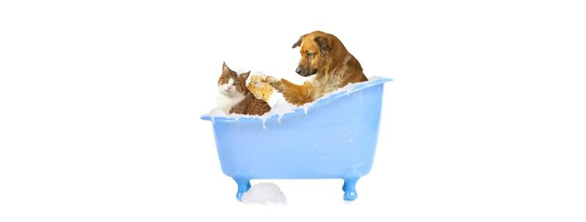 aseo para mascotas exiagricola