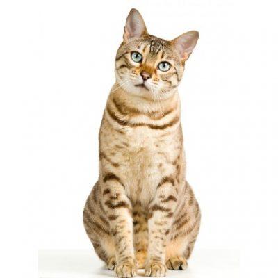 blog renal gatos 400x400 - ¿Como saber si tu gato tiene una enfermedad renal?