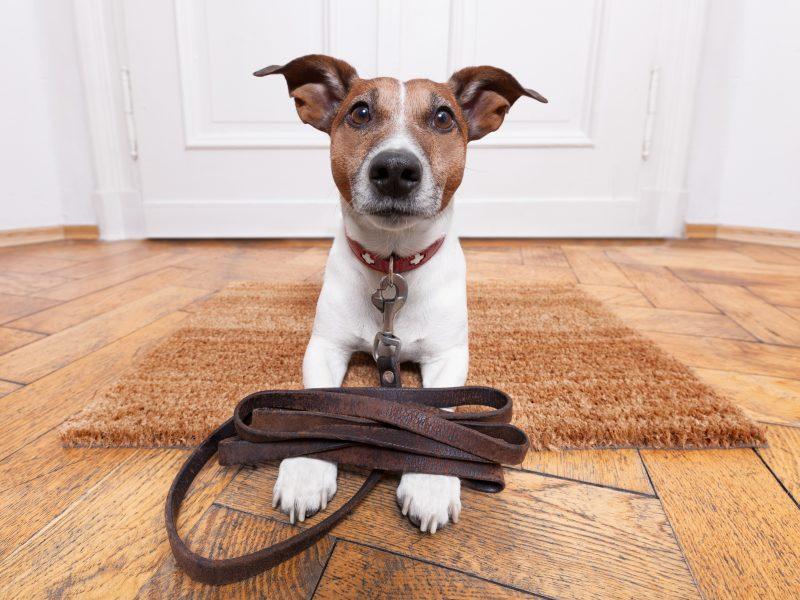 Paseando tu perro exiagricola