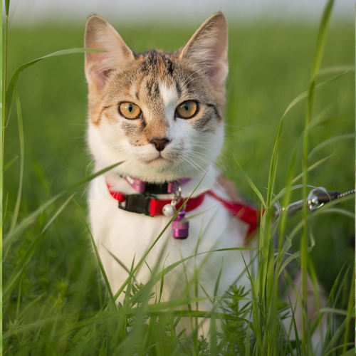 Gatos Exiagricola